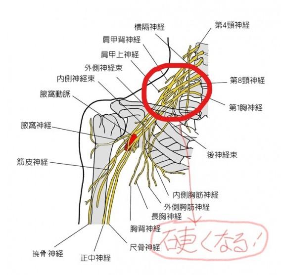 頸肩腕症候群_LI (3)
